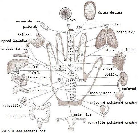 kazdy-prst-je-spojeny-se-dvema-organy-tato-japonska-metoda-leci-do-par-minut