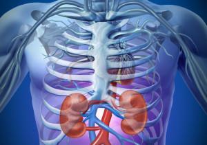 očista ledvin