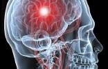 Mozek - paměť