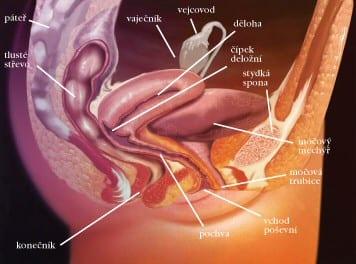 Popis onemocnění. Nádory pochvy tvoří asi 1 % všech gynekologických nádorů.